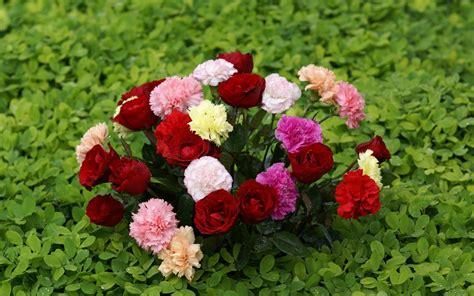 imagenes de flores naturales bonitas fotos de ramos de flores hermosas