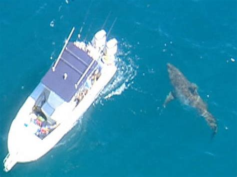 sinking boat surrounded by sharks man climbs on dead whale surrounded by sharks reefs