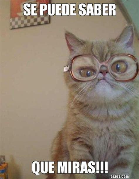 imagenes unicas graciosas gatitos con frases chistosas imagenes de gatitos con frases