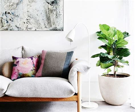 inside home plants 30 times an indoor plant added magic to an interior