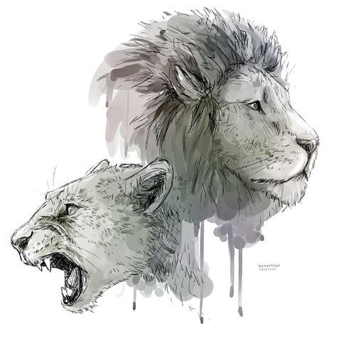 sketchbook transparent background lioness roar transparent background png mart