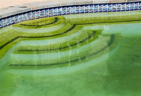 how to get rid of a pool table how to get rid of algae in pool pool done