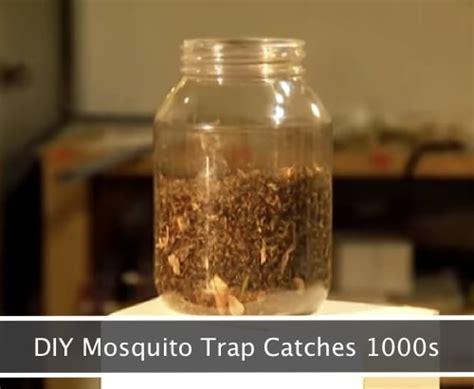 diy mosquito trap   catch  homestead survival