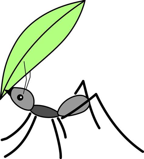 Ameisen Im Garten Was Tun 4081 by Was Tun Gegen Ameisen Tipps Und Tricks