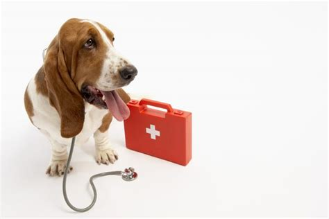 pyrantel for dogs side effects of pyrantel pamoate for dogs care the daily puppy