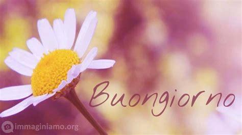 immagini buongiorno con fiori immagini e frasi quot buongiorno quot immaginiamo org