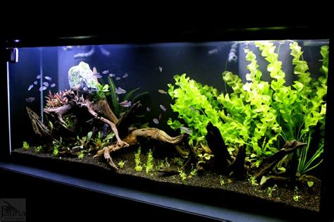 fauna aquascape 17 best images about aquascaping on pinterest ferns java and planted aquarium