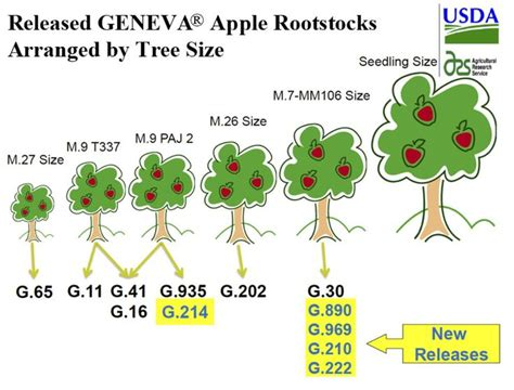 Nursery Layout Tool 17 best images about grafting fruit and tree rootstocks on