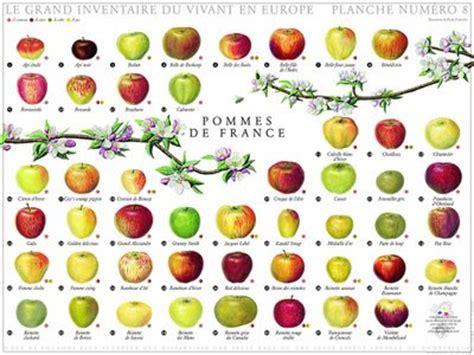 apple varieties today s treasure by jen pommes de france apple season
