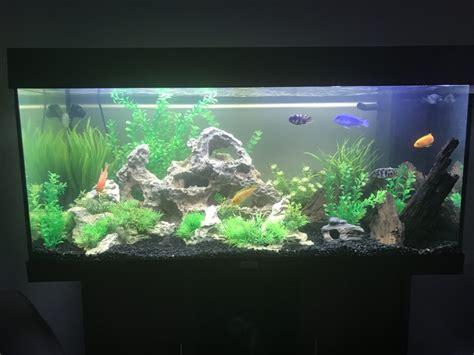 aquascaping african cichlid aquarium aquascaping african cichlid aquarium mixed african cichlid