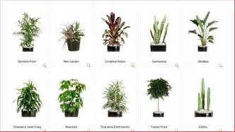 How To Make An Indoor Herb Garden - asia plant rental kuala lumpur garden maintenance services hotfrog malaysia