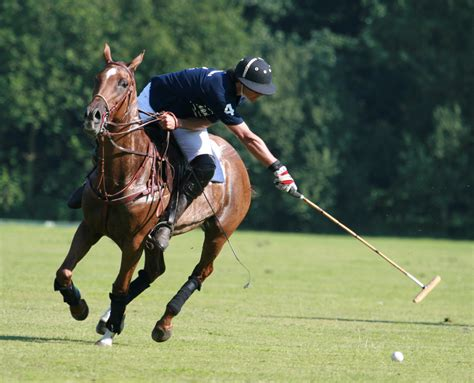 More Ponies For Polo by Polo Going For A Offside Reach By