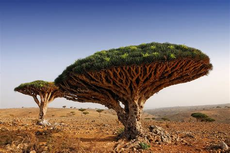 Trees From Around The World by 80 Most Beautiful Tree Pictures From Around The World