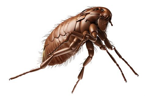 what to do if your has fleas has fleas what to do in house 28 images how to get rid of fleas how to build a