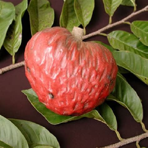 anonas fruit tree 227 best images about viva la frutta on