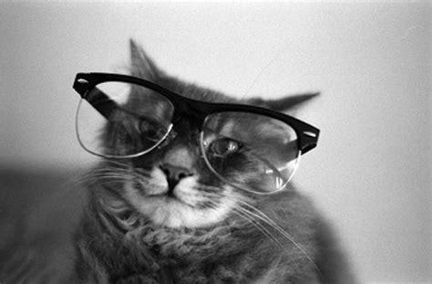 Kacamata Arianne kumpulan foto kucing yang menggemaskan