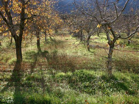 Obstb Ume Pflanzen Wann 4054 by Obstb 228 Ume D 252 Ngen Im Herbst