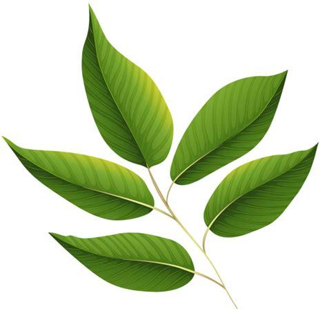 green leaves png image veerendra vijaya pinterest green leaves png clipart image card graphics leaves
