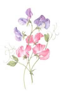 Birth Flower April - 25 best ideas about pea flower on pinterest sweet peas