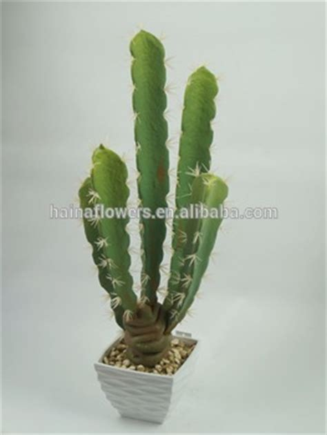 cheap indoor plants cheap large cactus indoor plants wholesale buy large