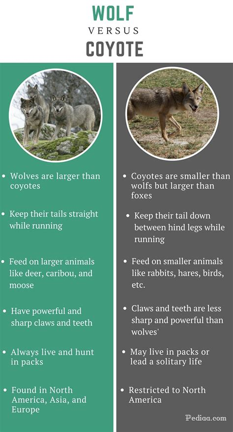 difference between wolf and dogs differences facts breeds picture