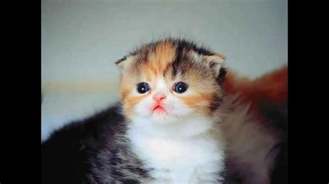Obat Jamur Kucing cara menghilangkan kutu pada kucing 085600000624 secara