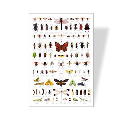 backyard bugs backyard bugs poster learning poster eco friendly poster bug identification