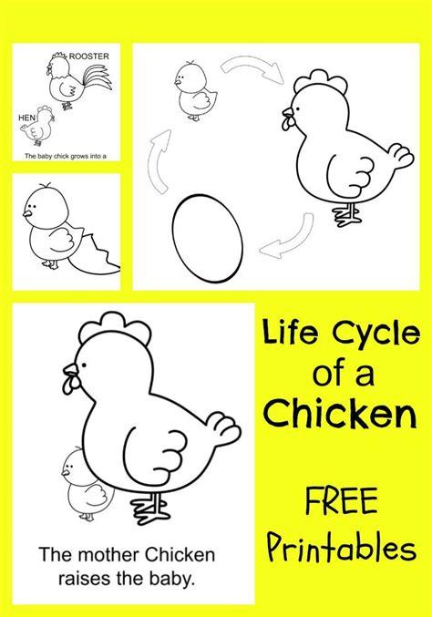 best 25 chicken life ideas on pinterest pet chickens