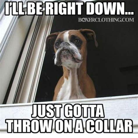 boxer dog meme blanket www imgarcade com online image