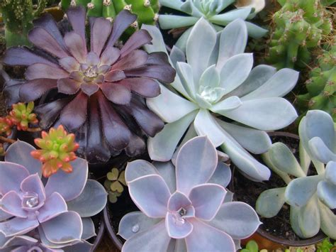 succulents plants cactus and succulent care for beginners world of succulents