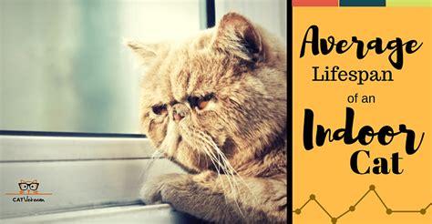 average lifespan of a top 28 average lifespan of a cat swissmiss how do animals live a cat s