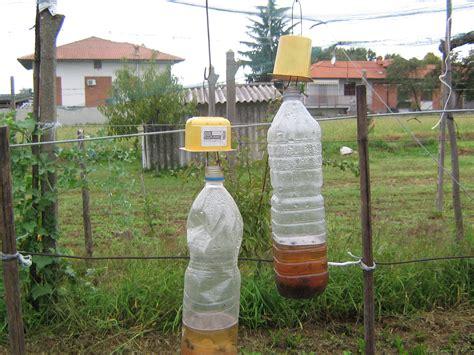 trappole per insetti volanti trappola per insetti con bottiglia l idea di un nostro