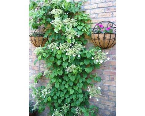 piante fiorite ricanti ortensia potatura cestino di fiori essiccati per