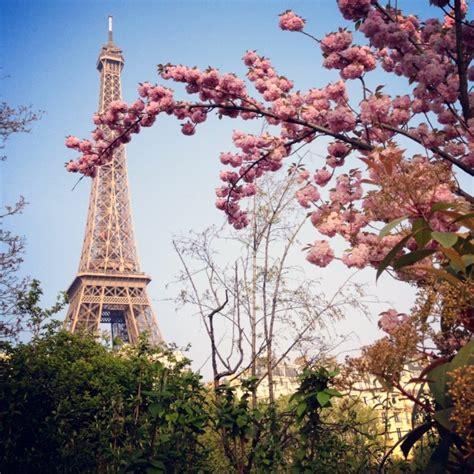 beleza da natureza fotos e imagens a beleza das cerejeiras em paris n 243 s no mundo