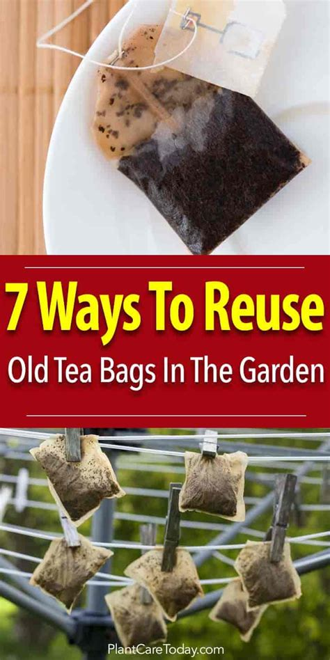how to use tea bags 7 ways to reuse old used tea bags in the garden 3 brilliant