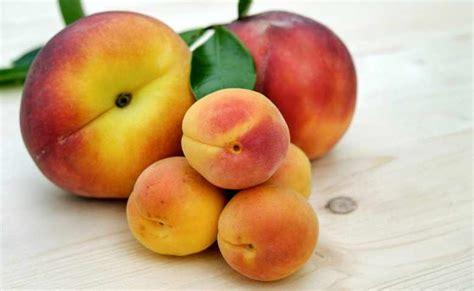 buah penambah darah  anemia  kaya nutrisi