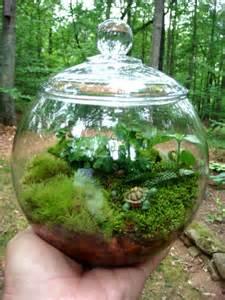 hydroculture terrarium small covered vase moss fern