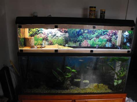 aquarium design for turtles turtle tank setup 55 gallon baby snapping turtle tank