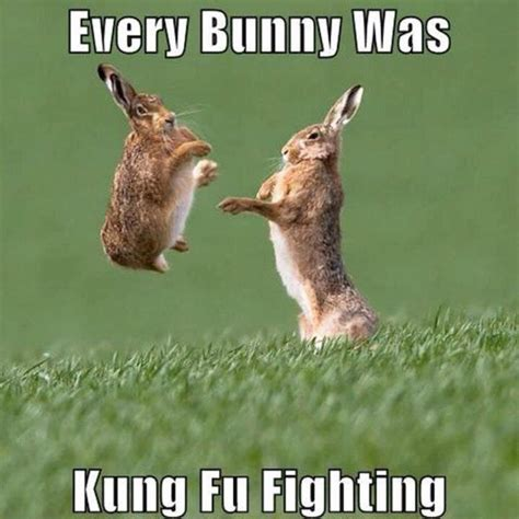 Funny Easter Bunny Memes - 20 happy easter egg hunting memes sayingimages com