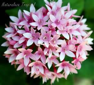 naturaleza tropical 8 plantas que florecen todo el a 241 o en