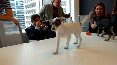 uber puppies photos we got uber puppies and it was awesome