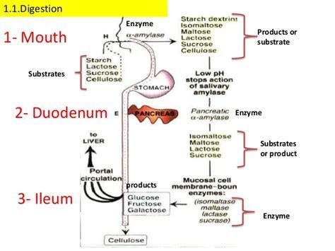 carbohydrates metabolism carbohydrate metabolism