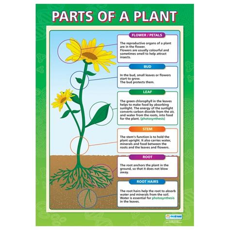 diagram of parts of a plant plants smore newsletters for education
