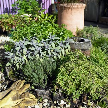 smart herb garden provides fresh herbs at home fresh herb garden