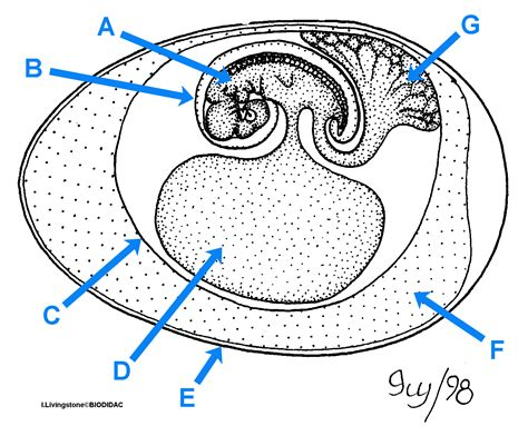 diagram of an amniotic egg biology 3010 gt gt flashcards gt test 2 studyblue