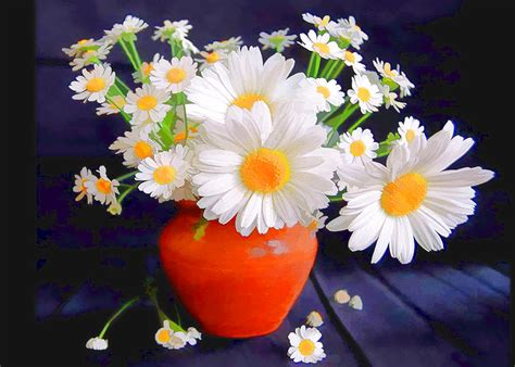 Daisies In A Vase by Day 458 Wow Loving The Freedom Becomeanex