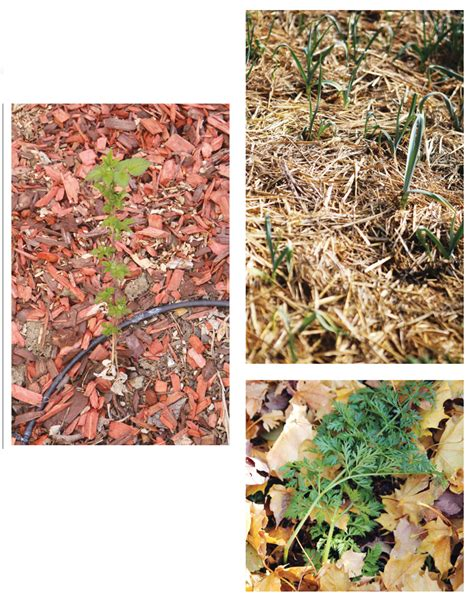 what is the best mulch to prevent weeds countryside network