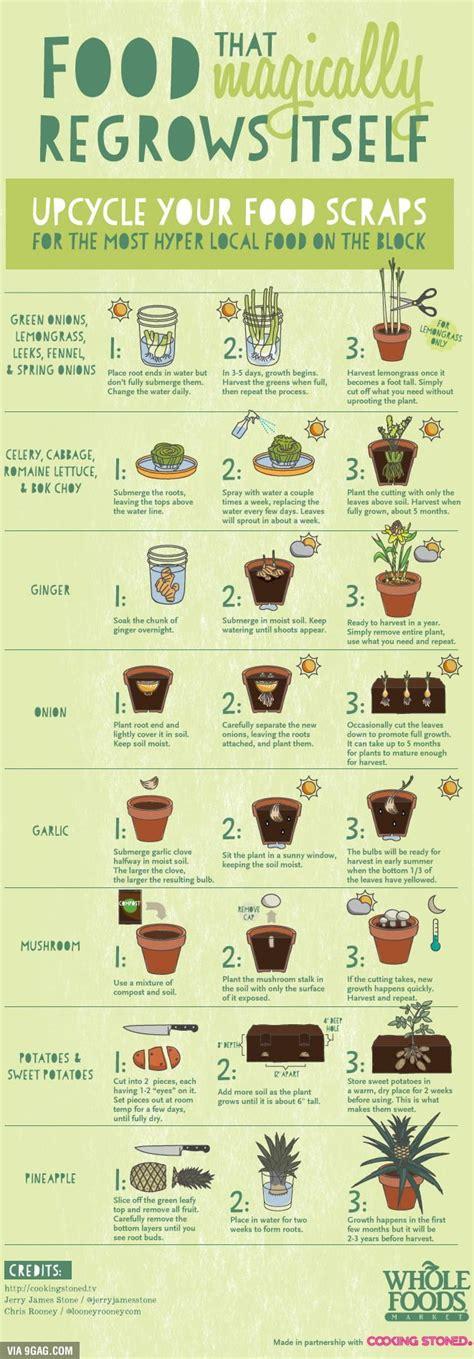 infinitive food source plants growing vegetables