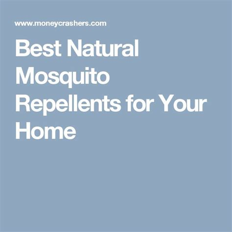 best natural mosquito repellents for your home backyard