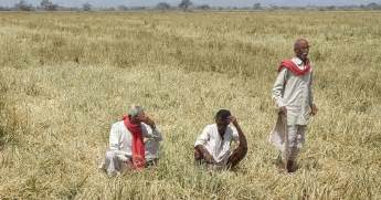 Wheat Loan Letter Haryana why are farmers in haryana protesting now